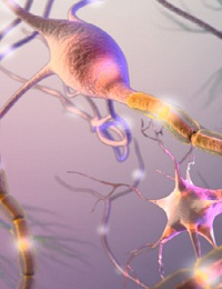 UNRAVELING THE COMPLEXITIES OF NEUROLOGICAL DISEASE AND INJURY WITH REAL-TIME LIVE-CELL ANALYSIS